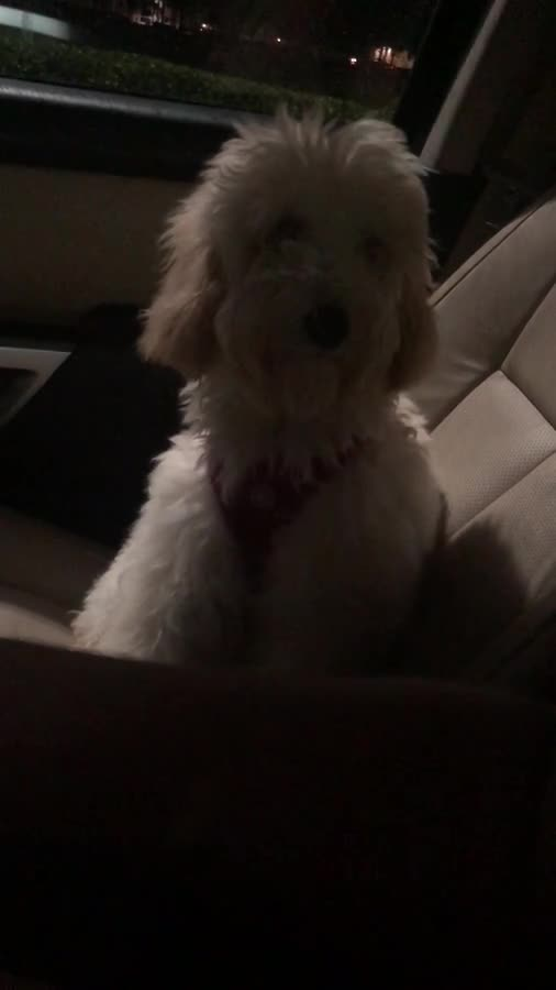 Pupper Salty. How my pupper reacted to me eating Taco Bell on the console right in front of her and ignored her for ten minutes. Then just randomly stared right