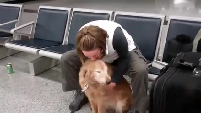 Doggo welcomes soldier home. .. look at how happy that dog is! those guys who say dogs don't love humans!