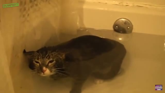"What an underwater 'meow' sounds like.. .. ""MleWb"""