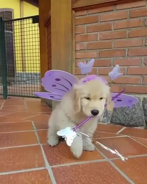 Monday's Cute Things - 21-8-2017. join list: CuteStuff (2132 subs)Mention History If we have such a control over genetics on doggos, why haven't we created the