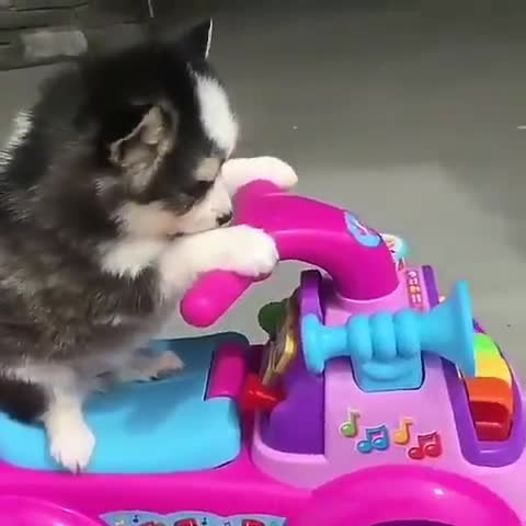 Monday's Cute Things - 30/4/2018. CUTE MEME OF THE DAY join list: CuteStuff (2136 subs)Mention History thanks for your support, I deserved this .. Need that song that plays while the cat is falling