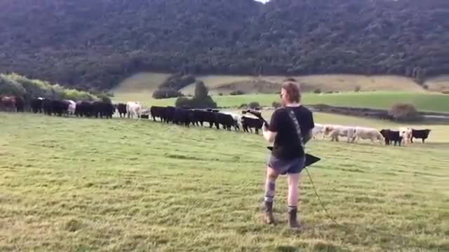 Moo metal. join list: GavMusic (45 subs)Mention History.. Cows didn't seem THAT impressed. When they really like the music, they'll come running.