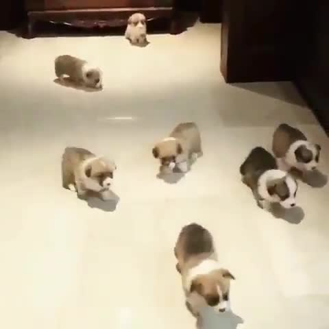Monday's Cute Things - 6/11/2017. join list: CuteStuff (2132 subs)Mention History Odds are, I just wished someone a happy birthday and it is in fact their birth