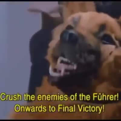 French resistance fighters shot. Colorized footage of a german attack on french resistance fighters where germans use dogs as a morale booster. Footage was reco