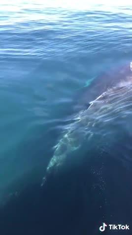 whale call. .