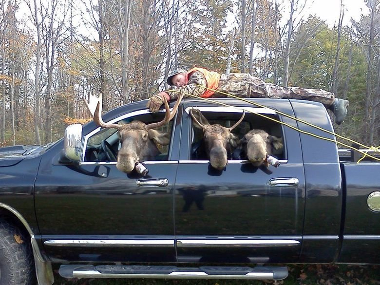 A successful hunt. Several guys from Sudbury, Ontario dressed up their truck with a guy tied to the roof. The driver and passengers put on Moose Head costumes.