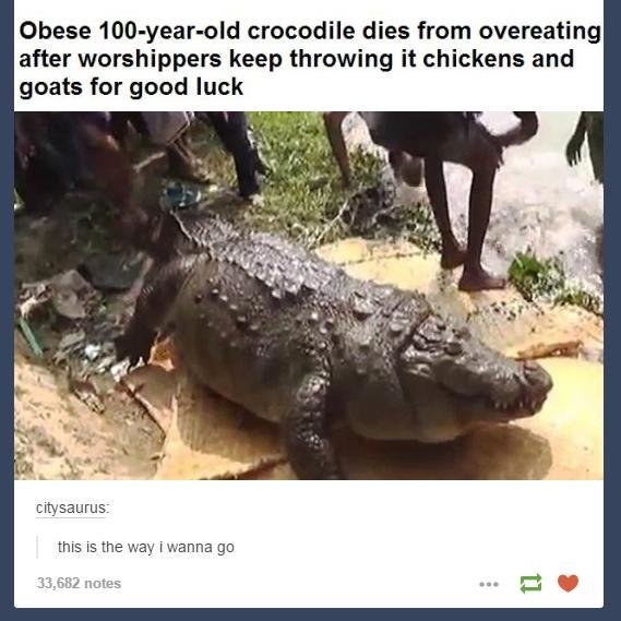 A tragedy. . Obese , crocodile dies frem , after keep '. it , and gents for good luck this is the taut in-. n' we neater. it probably died happy
