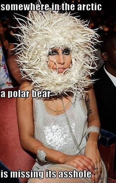 "A Polar Bear is missing its asshole. Credit: ?. I 'kt) tin iii an ieft l "" iit. I wonder why I automatically assumed that, that was Lady Gaga."