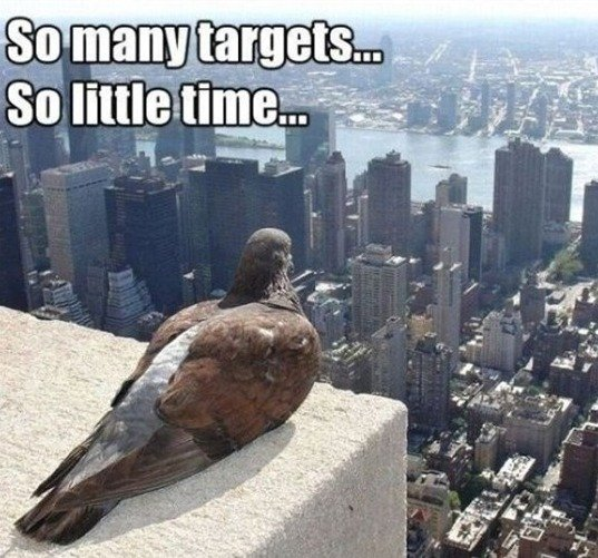 A Summary of a Pigeon's Life. Sorry if you've seen it before.