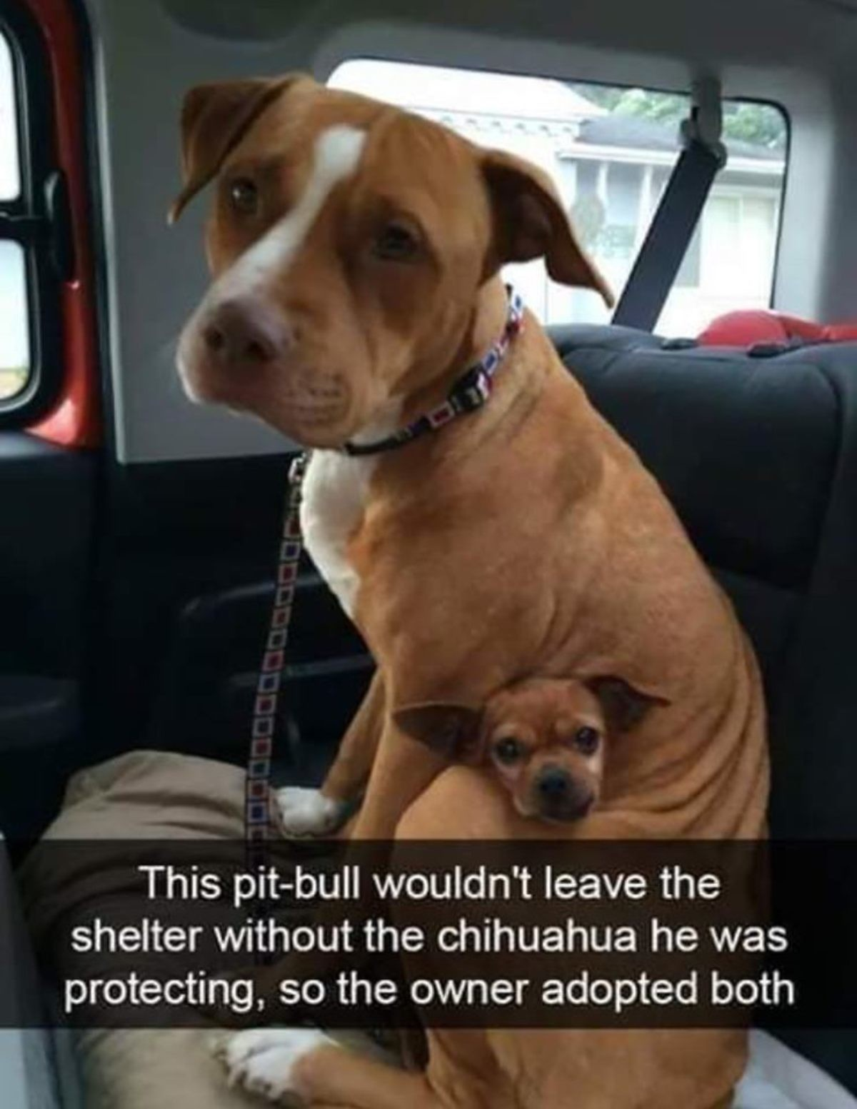 Absolutely Wholesome. .. Wow, i didn't know they gave you food to bring home for your pitbull.
