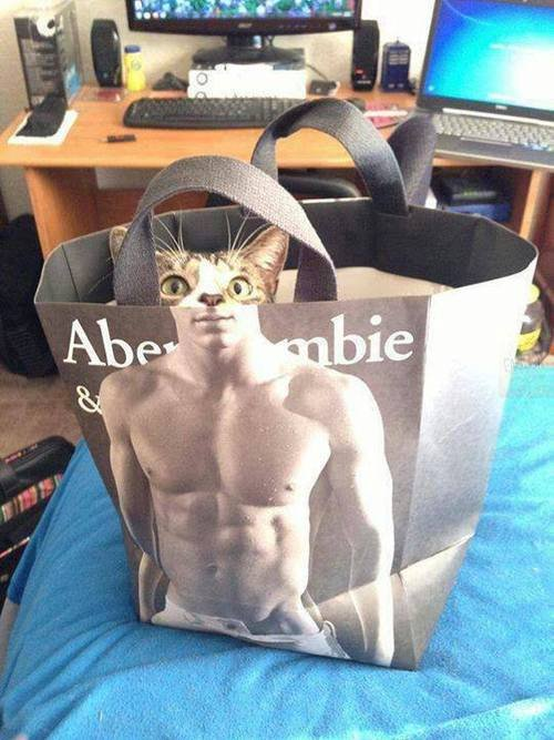 Admins cat. .. Waiting for someone to draw a complete sexy model of this.