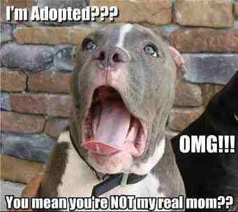 Adopted ?. . mean Hut Pu' ,