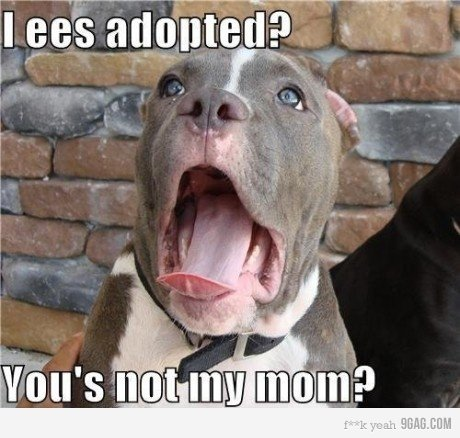 adopted. poor dog.. if i see 1 more post from 9gag im gonna lose my mind. 9gag watermark !