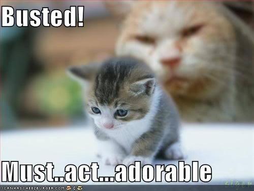 Adorable Cloak Initiated. Damn kittens... you adorable.