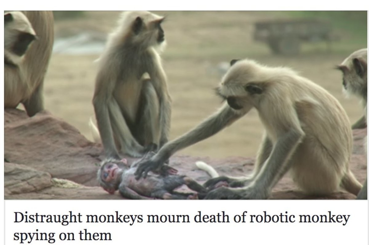Americans after overthrowing the government. .. If alien have visiting us, i imagine a similar article Distraught homosapiens mourn death of synthetic humanoid spying on them.