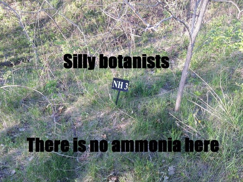 Ammonia. .. hahaha actually ammonium is NH4+ .. youve been nerded :)