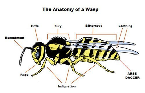 Anatomy of a Wasp. . The Anatomy of a Wasp. Cringe!