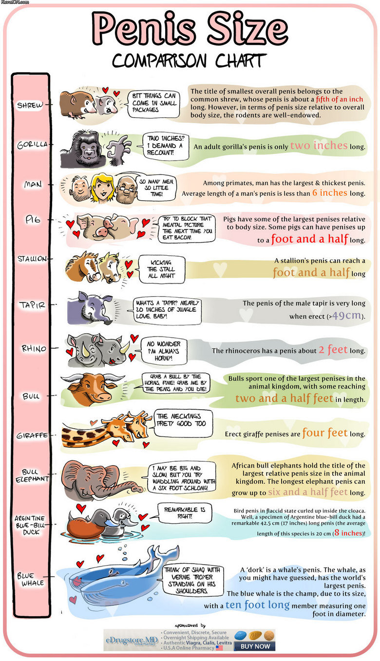Animal Penis Size Chart. If you find this is a repost, please post to the original picture, posted no more than 2 months ago.<br /> Poster: zpq, Source: K