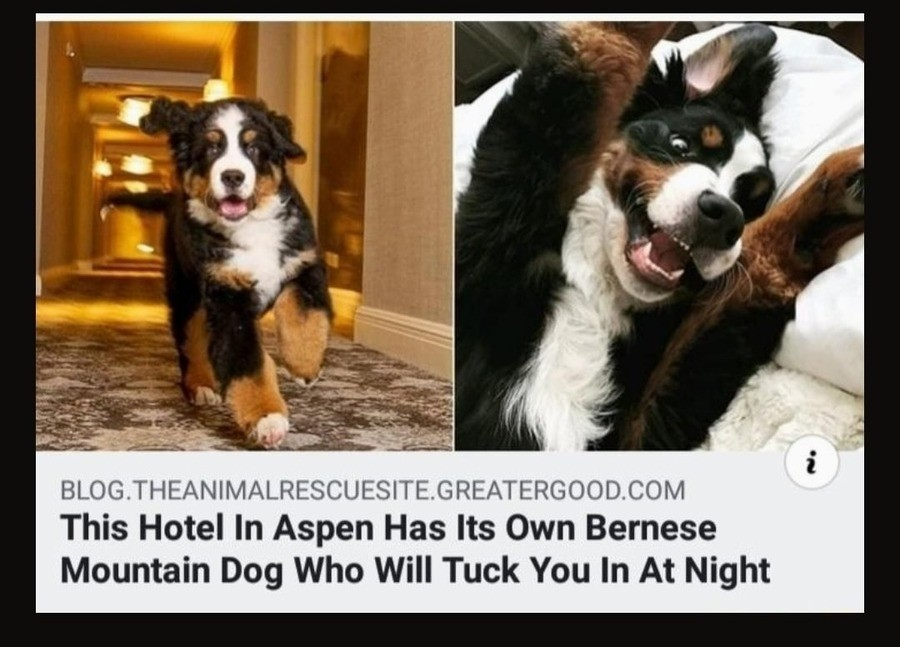 Aspen Hotel. .. Lucky for you I'm a dog lover