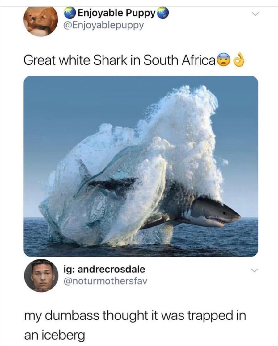 Avatar Shark. .. The shark looks really fake