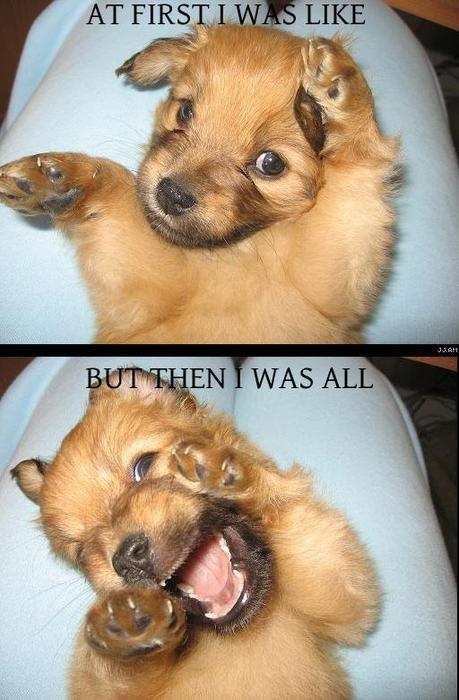 awesome dog. .