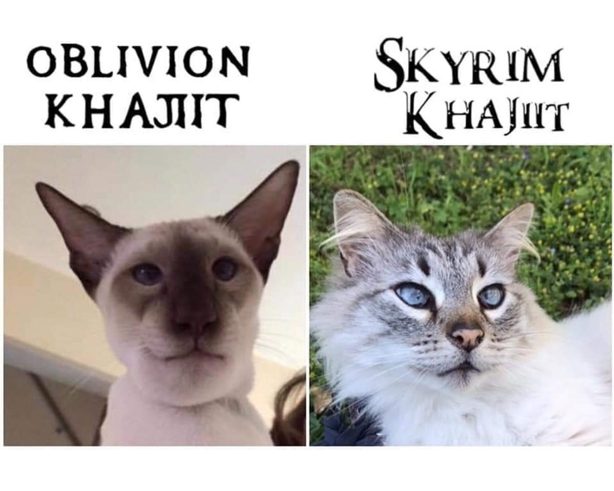 berserk comfortable Kookabura. .. Lets be honest, all Oblivion faces looked like arse.