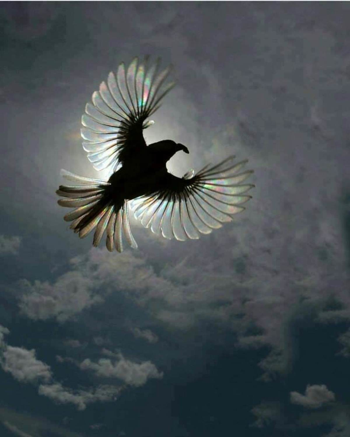 Birb!. Not my photo, just thought it was cool.