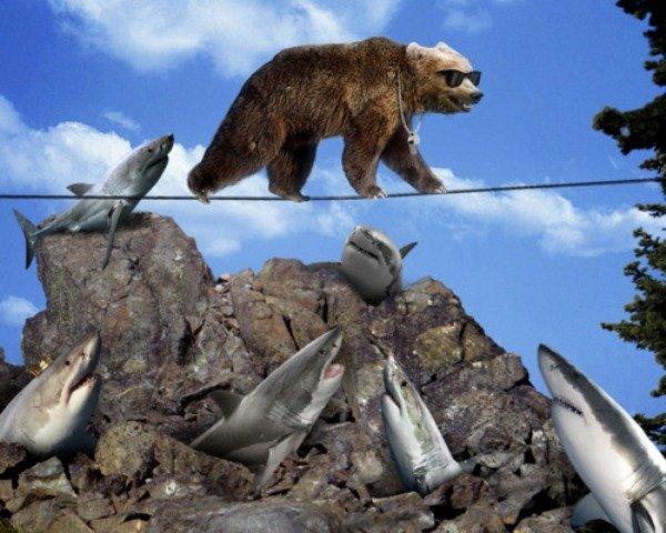 you i'm a bear. .. my sharks will make quick work of 00Bear