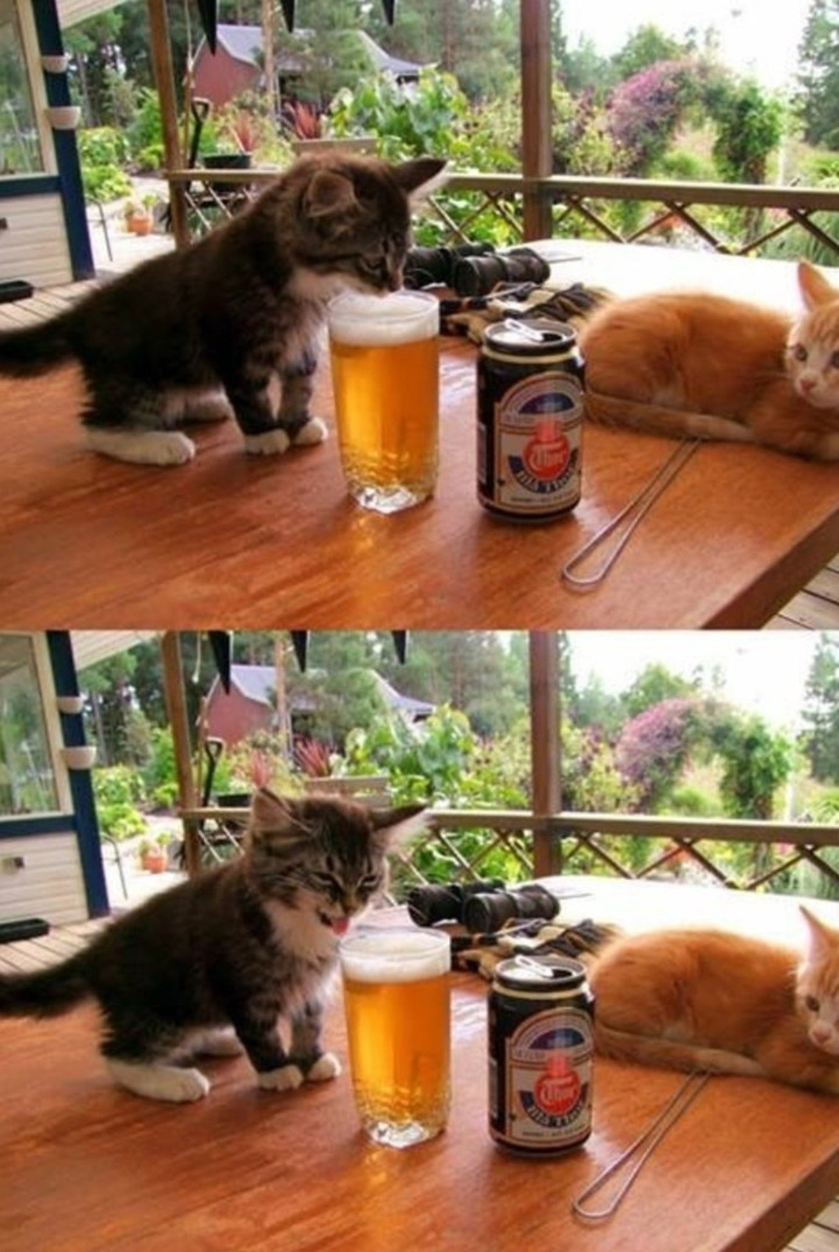 Cat no like. join list: QtStuff (404 subs)Mention History.. When your 12 years old and sneak one of your dad's beer from the fridge.