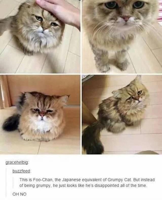 cat. .