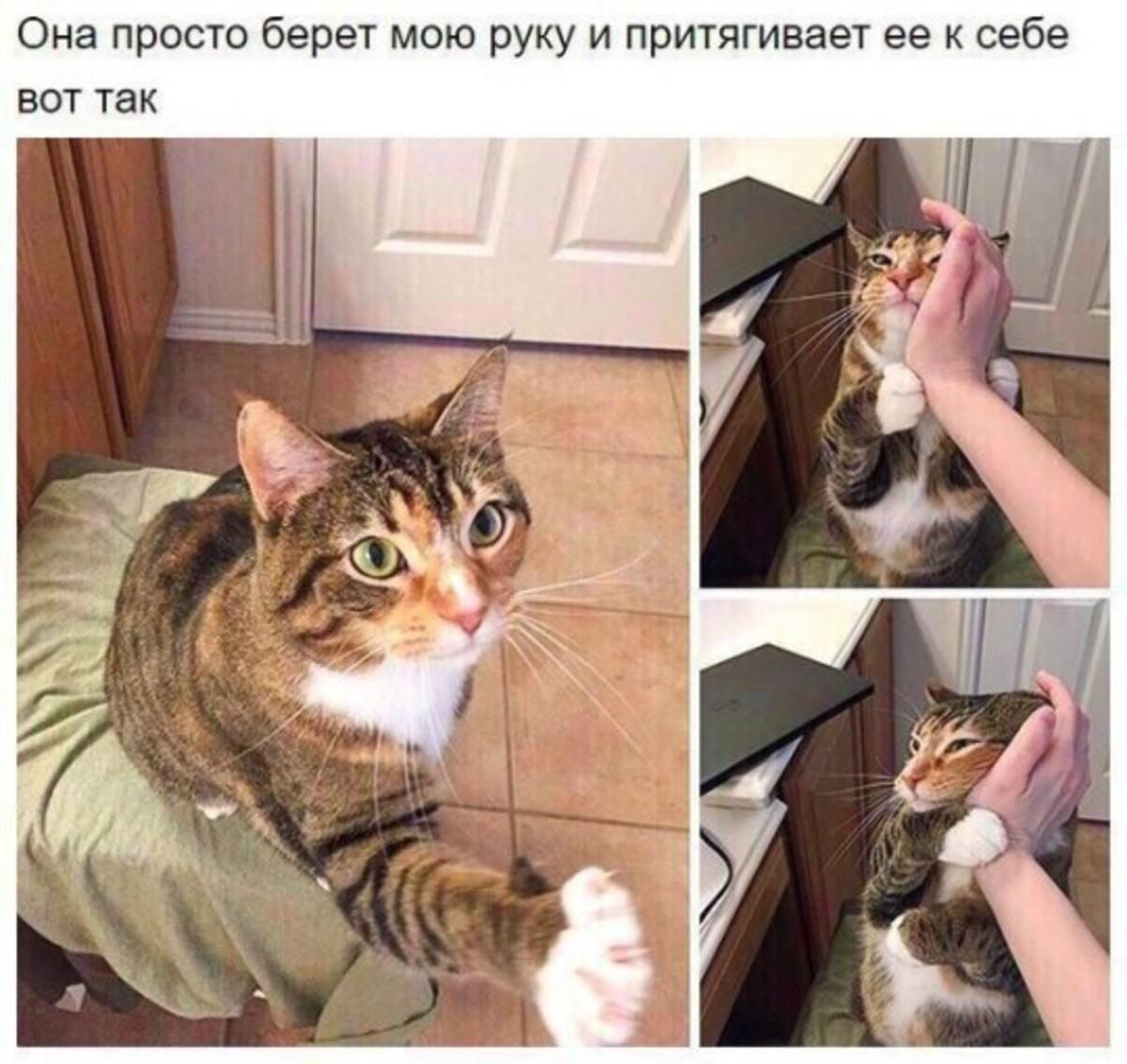 Cats are God's gift to humans. . BOT Tax. I don't speak cheeki breeki, can some cyka translate?
