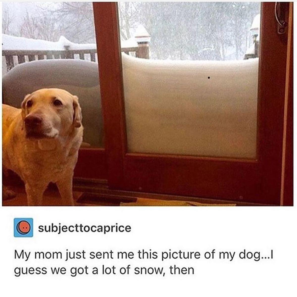 Concerned dog for reference. .. inb4