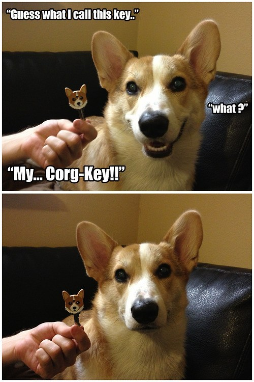 """Corgi ain't got time for your sass. Corgis dont play, only battle.. Time what I can this Item."""""""