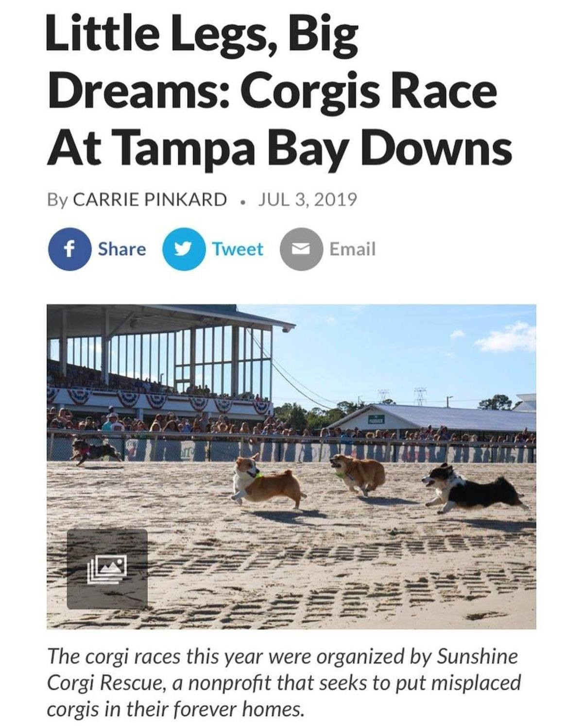 Corgi race. I had no idea this was a thing.. >corgi races