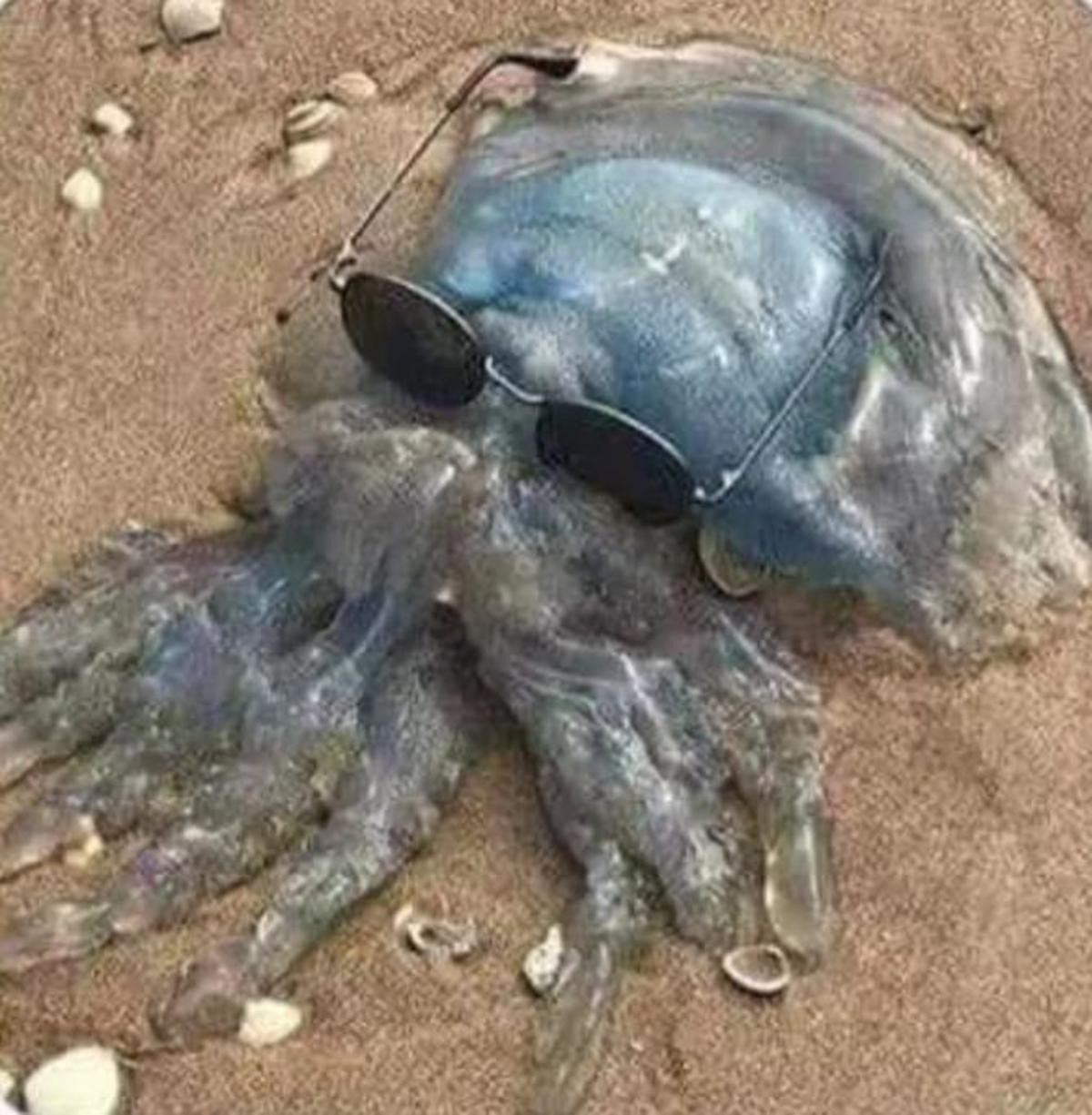 cursed jellyfish. join list: CursedPictures (212 subs)Mention History.. I didn't know octodad was a boomer