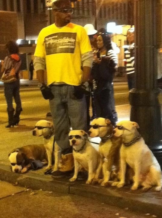 dawg dogs thug life. .. How in the did you get a dog to wear sunglasses?