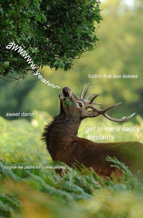 Deer. . sweet dam '