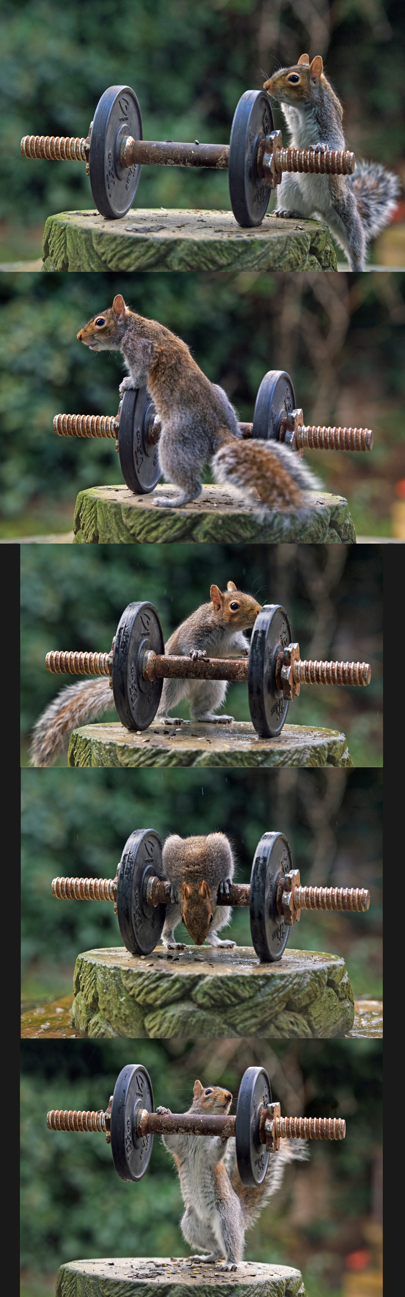 Do you even lift squirrel?. this is admins pet squirrel.. Do Y'all Even Lift?