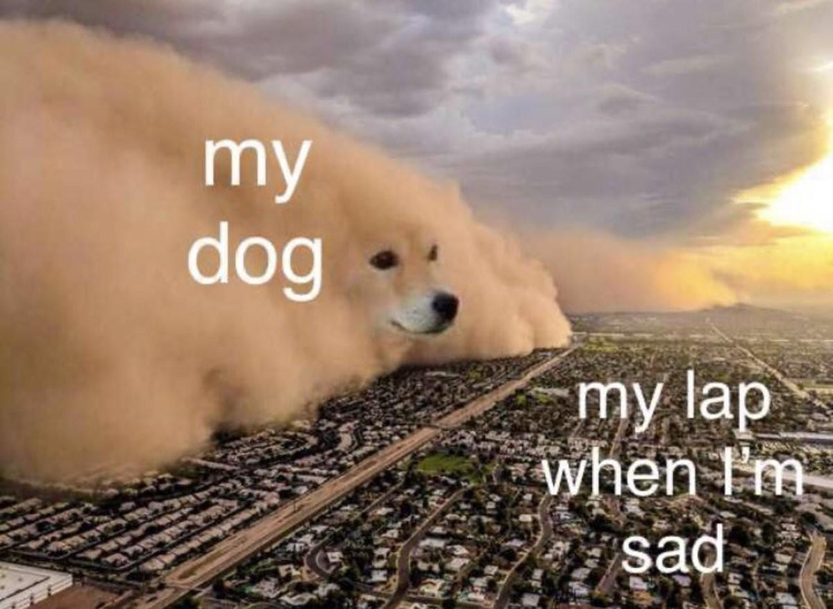 Dog. .