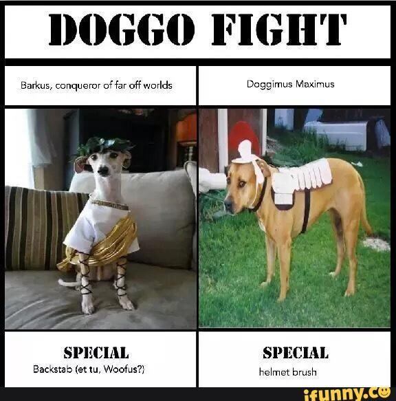 Doggo comp. Initiate spin.