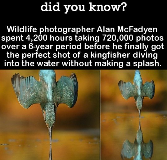 DYK Comp #118. Subscribe for more .. did you know? Wildlife photographer Alan McFadden spent 4, 200 hours taking 720, 000 photos over a period before he finally