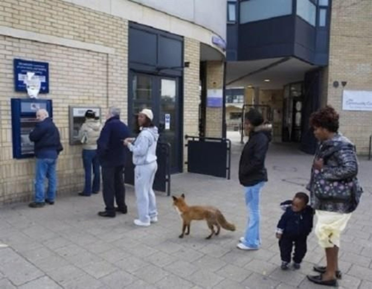 Ecthelion gets paid. .. A fox standing in a place that happens to be an ATM line is one thing... ...but everyone in the line acting like it's completely normal and no big deal is a who