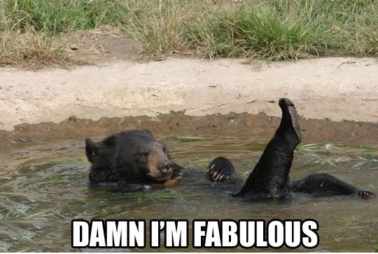 Fabulous Bear. .. Someone roll this NAO!
