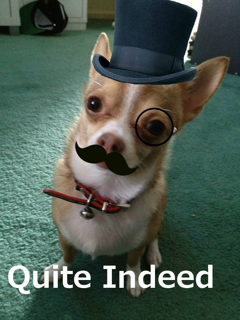 fancy dog is fancy.. exquisite. Dedz to Tenjho for the tweak. big ups the tags are a lie..