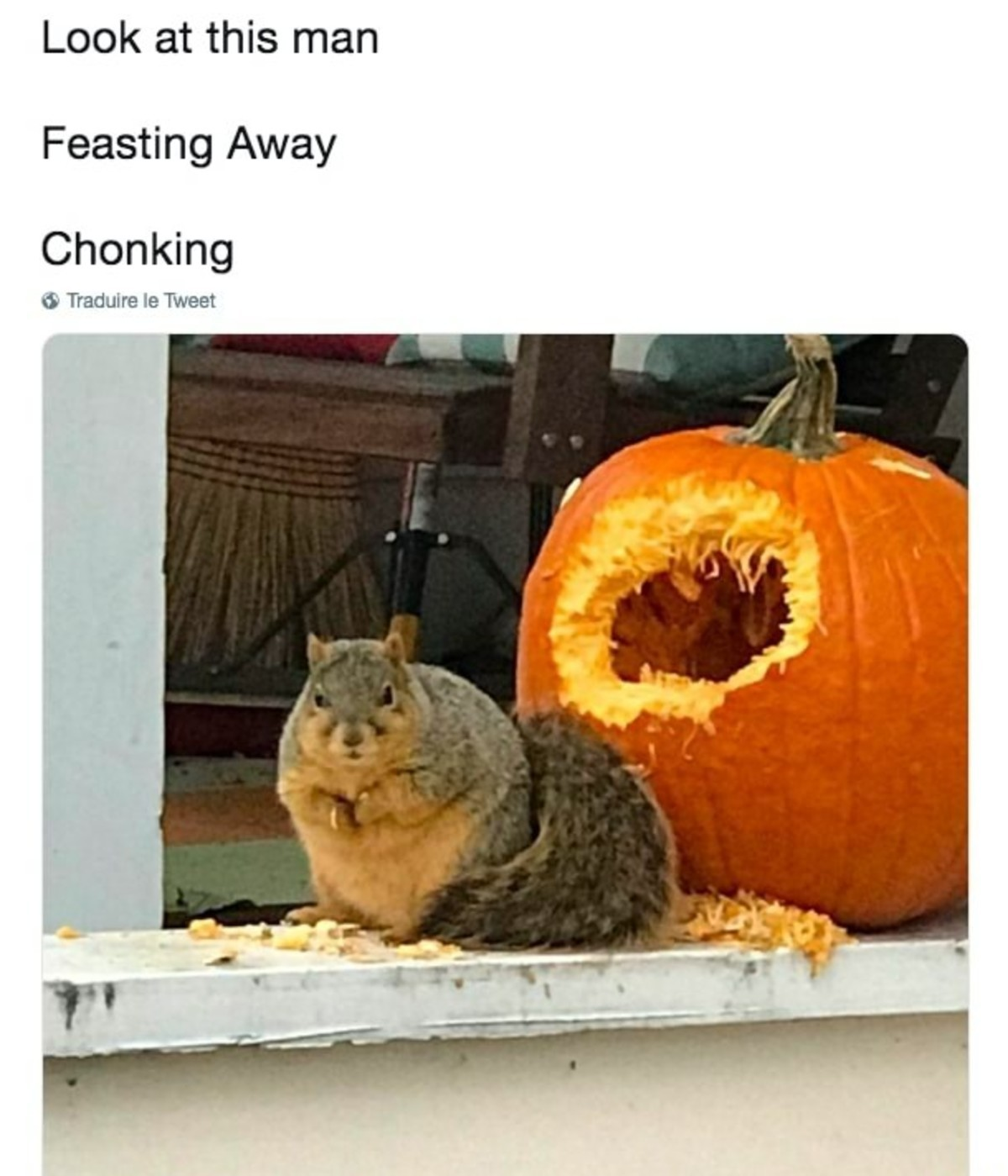 FAT ..🐹🐭. .. Watched a squirrel kill and then eat the head of a small blackbird today. Lots of blood. I see squirrels different now, and there's a ton of them around here.