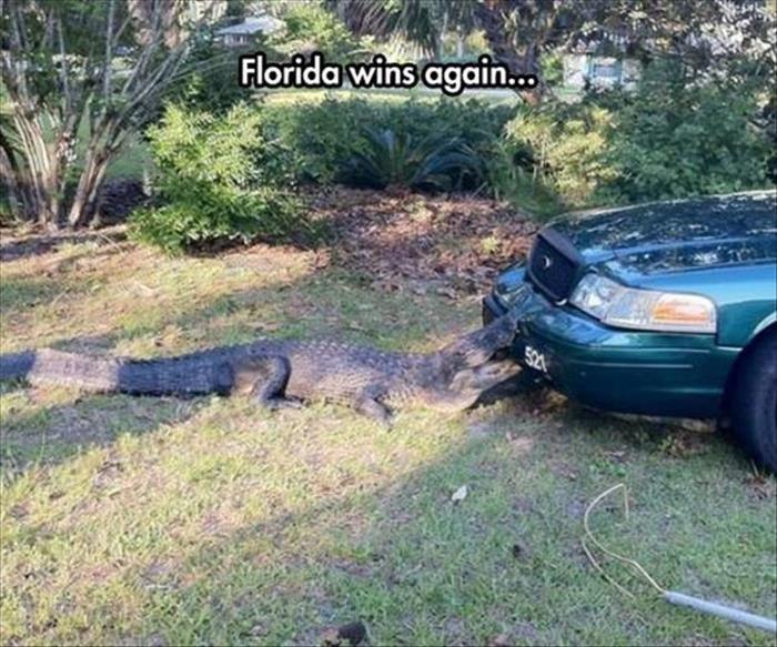 Florida 1: Your State 0. source: dumpaday.