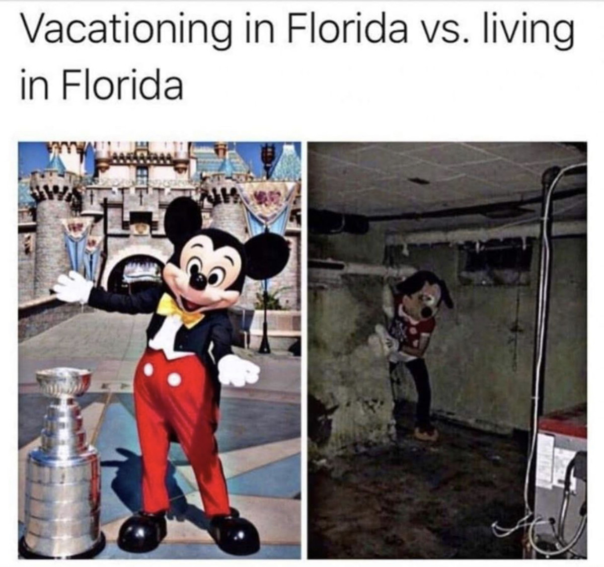 Florida mouse. .. I hate even vacationing here. Its hot, humid, and you see a homeless person with a 10x average chance of being high on meth every other public street.