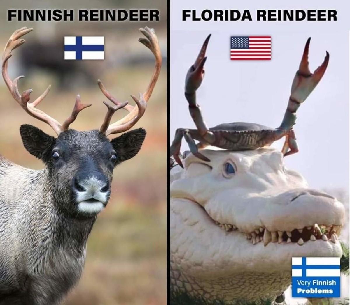 Florida Reindeer. .. Why Finland? America has reindeer.