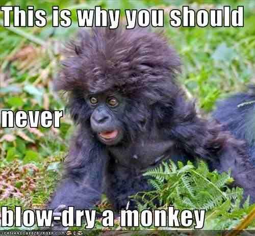 Fluffy Gorilla. ^.=.^.. It's Turk!