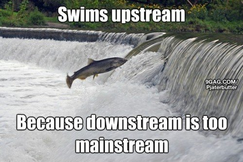 fo show.. . Swims [ warm :5, Ill downstream [